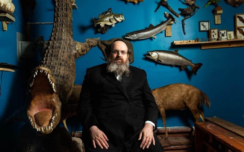 הרב שאול שמעון דויטש, מייסד מוזיאון חיות התורה בניו יורק, ליד פוחלץ של תנין (צילום: משה רובין)