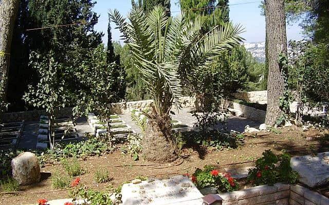 קברו של אבשלום פיינברג בחלקת עולי הגרדום בהר הרצל. במאי 2009 ניטע במקום חוטר מהדקל שצמח מגלעין התמר שהיה בכיסו בעת שנרצח (צילום: ד״ר אבישי טייכר)