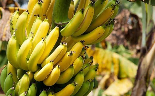 בננה: פצצת אנרגיה צהובה (צילום: pressdigital/iStock)