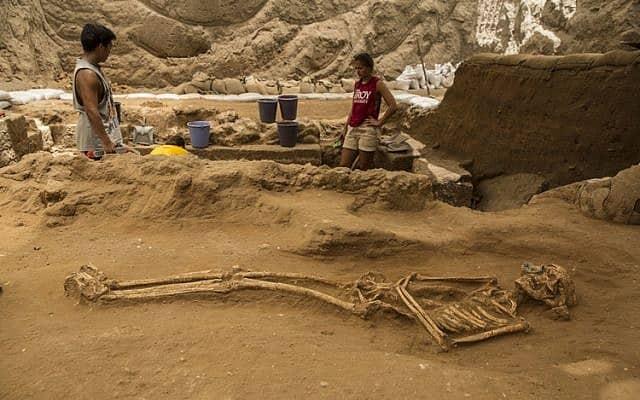 שלד מהמאה ה-9-10 לפני הספירה שנמצא בחפירות בבית הקברות הפלישתי על ידי משלחת לאון לוי לאשקלון (צילום: צילום: צפריר אביוב/משלחת לאון לוי)