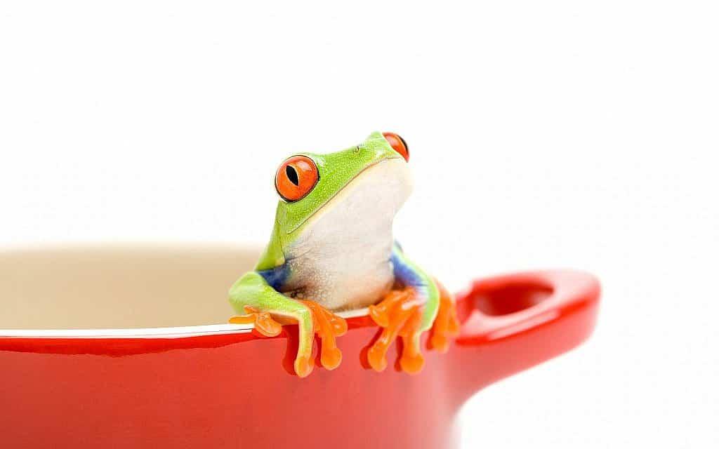iStock-frog (צילום: iStock-alptraum)