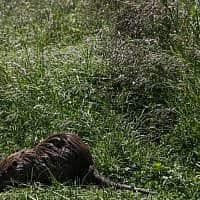 .לוטרה בגליל (צילום: נתי שוחט, פלאש 90)