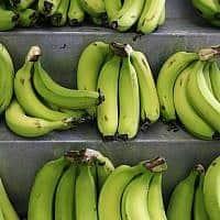 בננות (צילום: נתי שוחט פלאש 90)