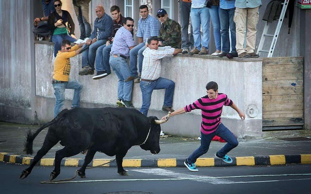 פורטוגל (צילום: Haim Shohat/FLASH90)