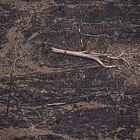 איזור שרוף באמזונס ב-23 באוגוסט 2019 (צילום: AP Photo/Victor R. Caivano)