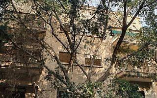 עץ ברחוב מלצ'ט 2 בתל אביב.  הורעל באמצעות הזרקת חומר לתוך הגזע בעשרות נקודות שונות (צילום: דורית פיגוביץ גודארד)