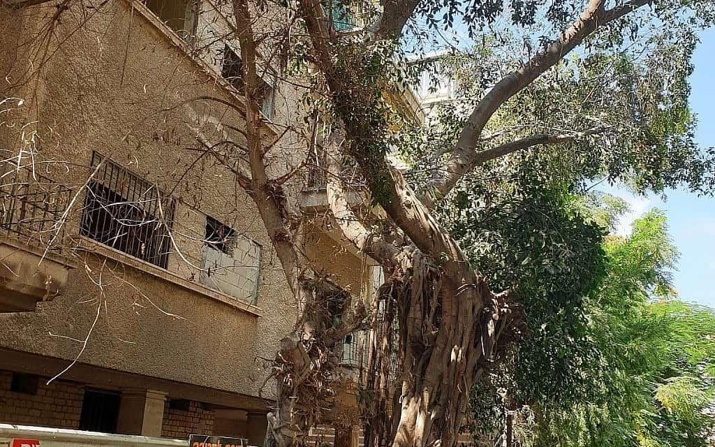 עצים ברחוב מלצ'ט בתל אביב (צילום: אביב לביא)