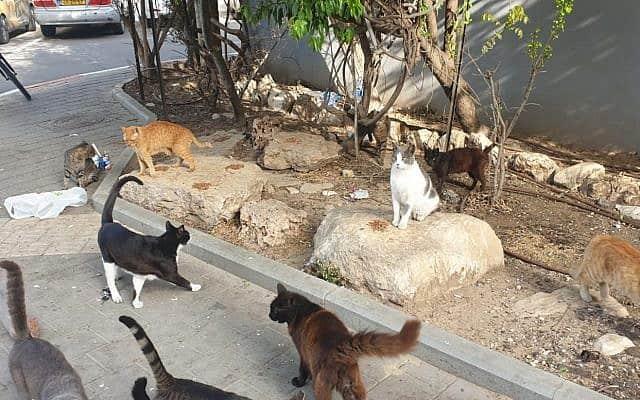 חתולים (טלי מלכה)