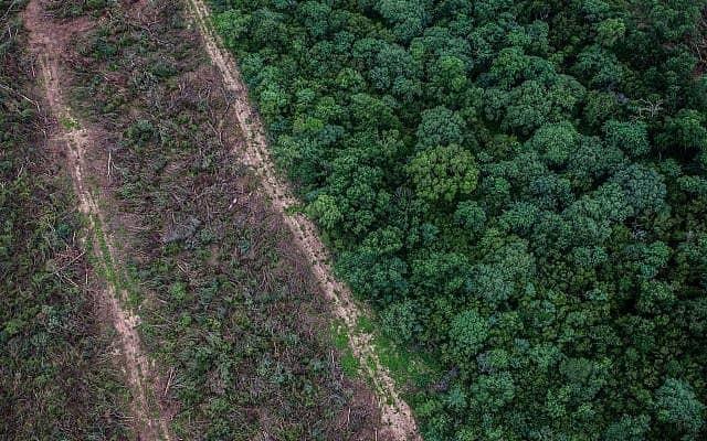 יער גשם שכרתה חברת קרסוד בצפון ארגנטינה (צילום: גרינפיס)