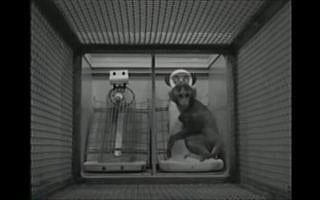 המחקר של הארלו על דפוס ההתקשרות של קוף לאם מתיל לעומת אם מבד. צילום מסך