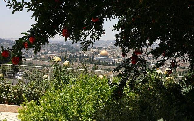 העיר העתיקה של ירושלים כשפי שהיא נראית מהר הזיתים. מונטיפיורי צפה בעיר מנקודת המבט הזו אך שמר מרחק מהעיר העתיקה בעקבות התפרצות של מחלה בעיר (צילום: שמואל בר-עם)
