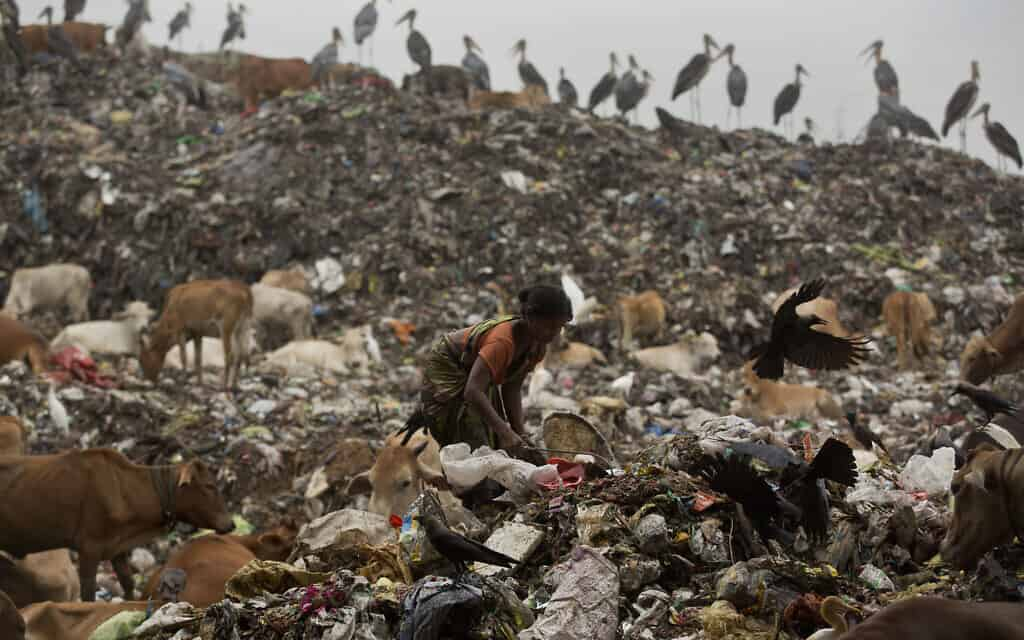 June 5, 2019, ragpicker searches for recyclable materials at a garbage dumping site on World Environment Day in Gauhati, India (צילום: AP Photo/Anupam Nath, File)
