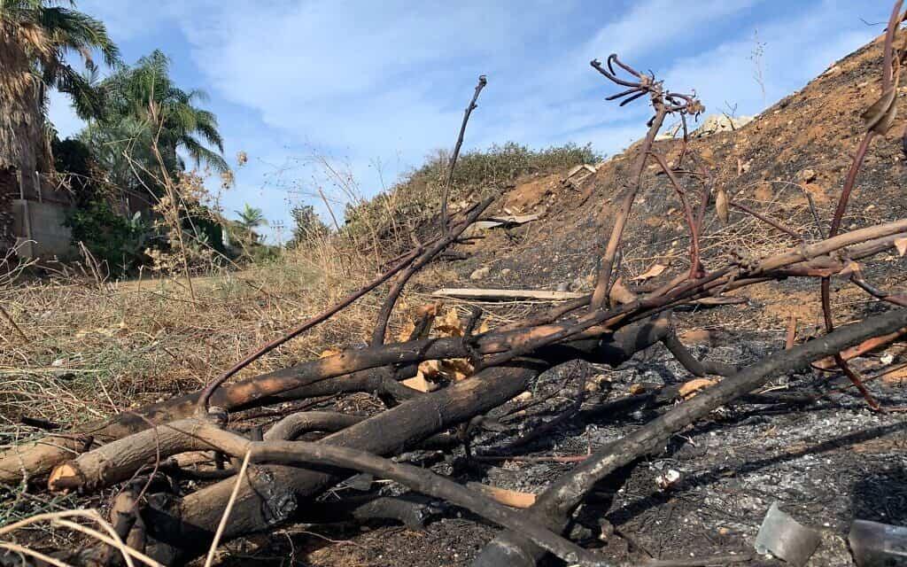 פסולת חקלאית באיזור מזכרת בתיה (צילום: אריק וייס)