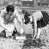 אזרחית בריטית ובתה מגדלות בצל בעקבות המחסור במזון במלחמת העולם השנייה (צילום: AP Photo)