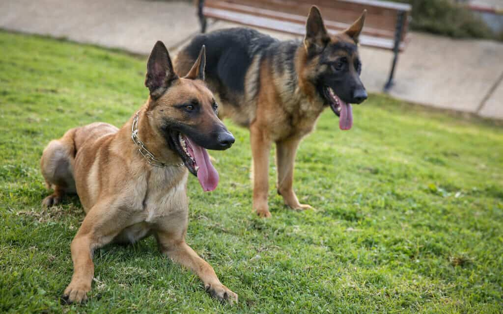 כלבים. אילוסטרציה (צילום: דוד כהן/פלאש90)