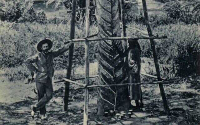 """בתחילת מלחמת העולם השנייה, מטעים של עצי גומי באיי הודו המזרחיים ההולנדיים, כמו זה שבתמונה מלפני 1925, היו אחראיים ל-90 אחוזים מאספקת הלטקס העולמית. מקורם של העצים בדרום אמריקה, אבל הם תורבתו באזורים של דרום-מערב אסיה שנפלו לידי היפנים במלחמת העולם השנייה. בתחילת 1942 היפנים כבר שלטו על יותר מ-90 אחוזים מאספקת הלטקס העולמית (צילום: ק""""י קליינגרותה/רשות הציבור)"""