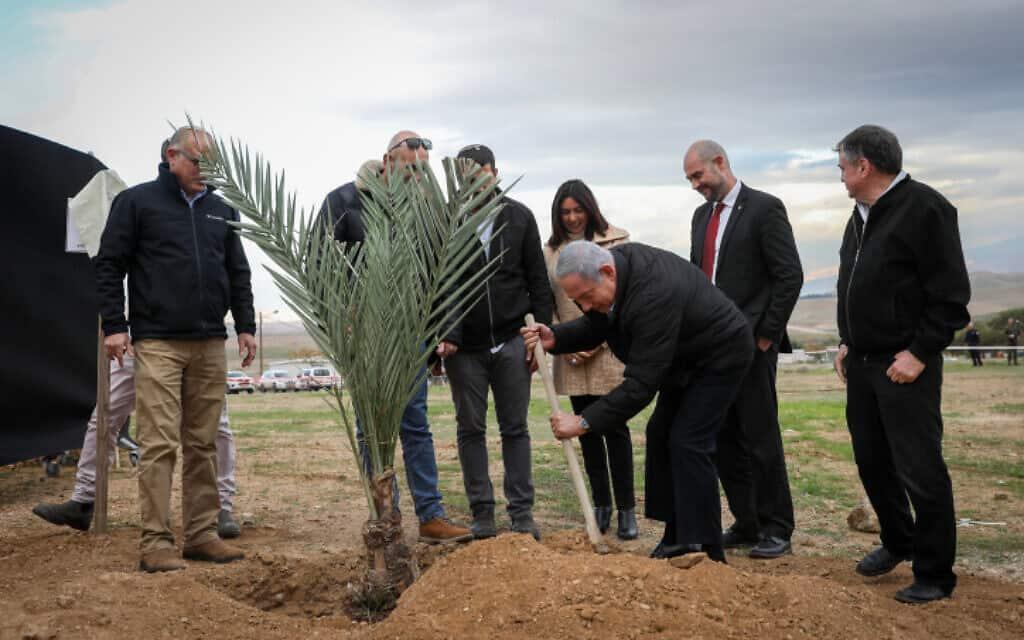 נתניהו נוטע עץ במבואות יריחו שבבקעת הירדן, היום (צילום: פלאש 90)