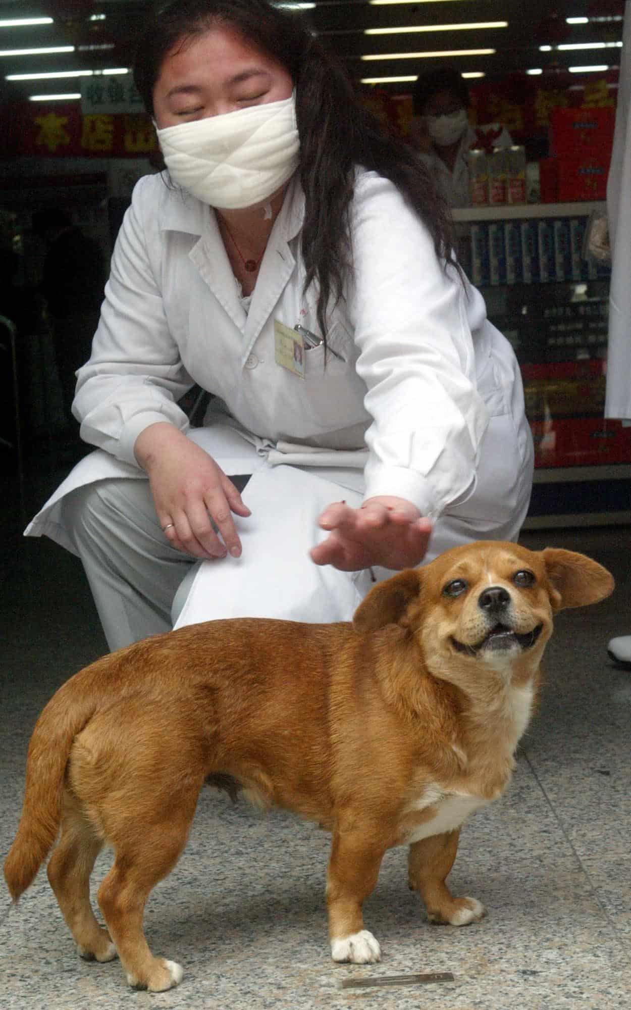 וכך זה נראה בימי הסארס: אישה סינית מלטפת כלב ב-2003, ארכיון (צילום: AP Photo/Ng Han Guan)