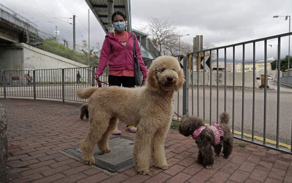 להוציא את הכלב בימי קורונה: הונג קונג, אילוסטרציה (צילום: AP Photo/Kin Cheung)