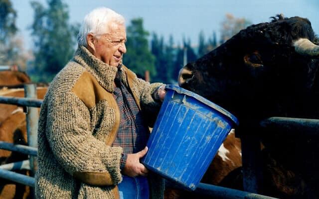 """.ראש הממשלה, אריאל שרון, ב""""חוות שקמים"""" בנגב. 1996 (צילום: Moshe Shai/FLASH90)"""