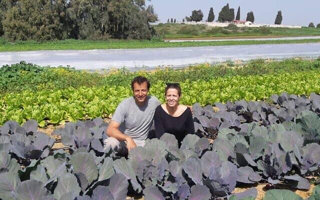 דנה וקובי שטיין, שדה ירוק, בית יהושע (צילום: אביב לביא)