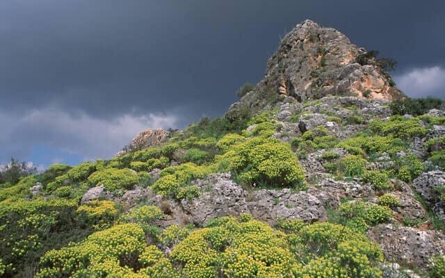שמורת טבע נחל מערות (צילום: דורון הורוביץ/פלאש90)