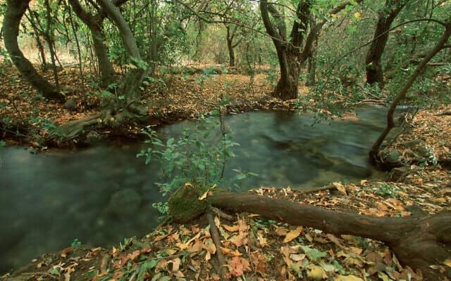 שמורת טבע תל דן (צילום: דורון הורוביץ/פלאש90)