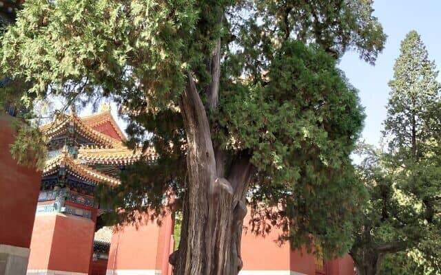 מקדש קונפוציוס בבייג'ינג (צילום: יפעת פרופר)