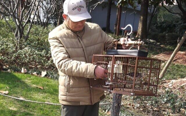 שתי שריקות קצרות ומהעצים הסמוכים מגיעה ציפור נכנסת לכלוב. ״איש הציפורים״ בפארק בשנגחאי (צילום: יפעת פרופר)