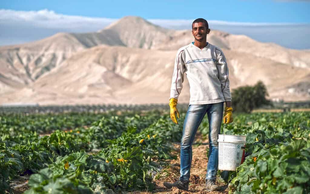 פועל פלסטיני בשדות החקלאות ליד מושב משואה בבקעת הירדן (צילום: יניב נדב/פלאש90)