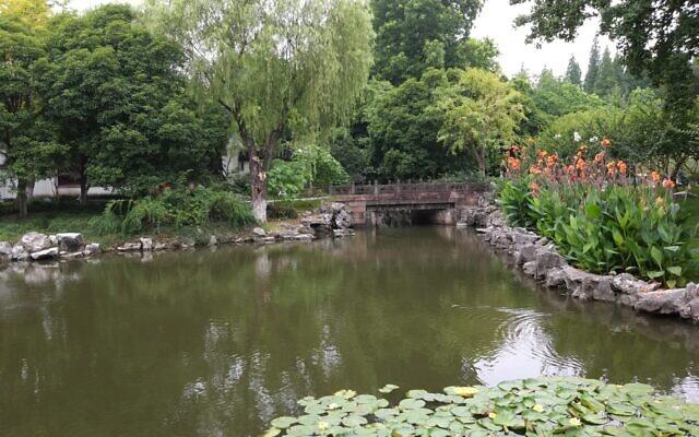 ליבלוב ופריחה בשנגחאי (צילום: יפעת פרופר)