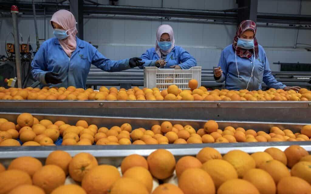 מפעל לייצוא תפוזים במצרים, 15 באפריל 2020 (צילום: AP Photo/Nariman El-Mofty)