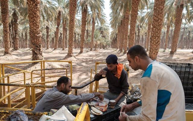 עובדים פלסטינים במטע תמרים בבקעת הירדן (צילום: יניב נדב/פלאש90)