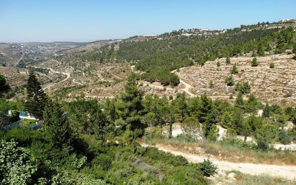 רכס לבן בהרי ירושלים (צילום: דב גרינבלט)