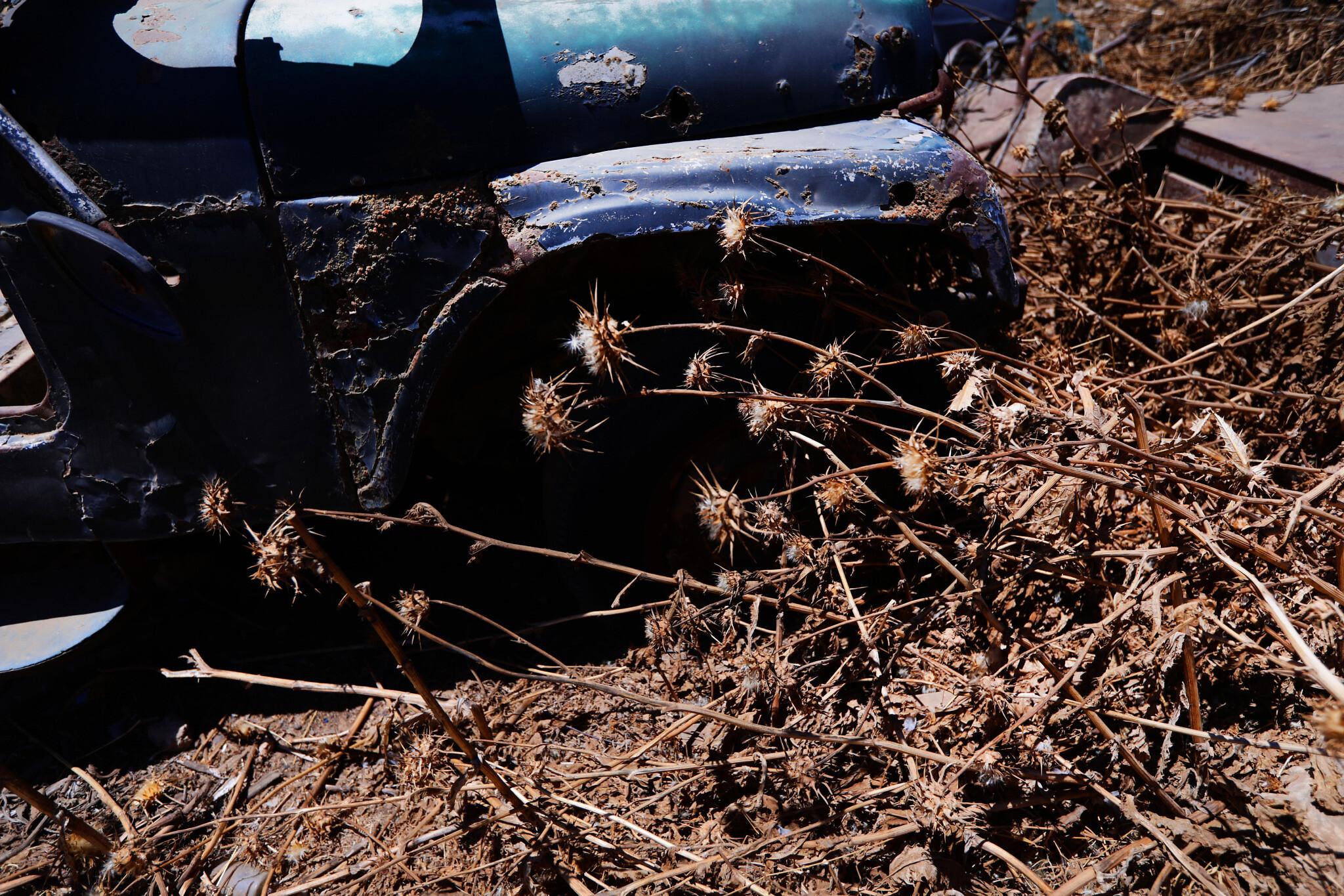 גרוטאת רכב בחוות טליה (צילום: אלדד רפאלי)