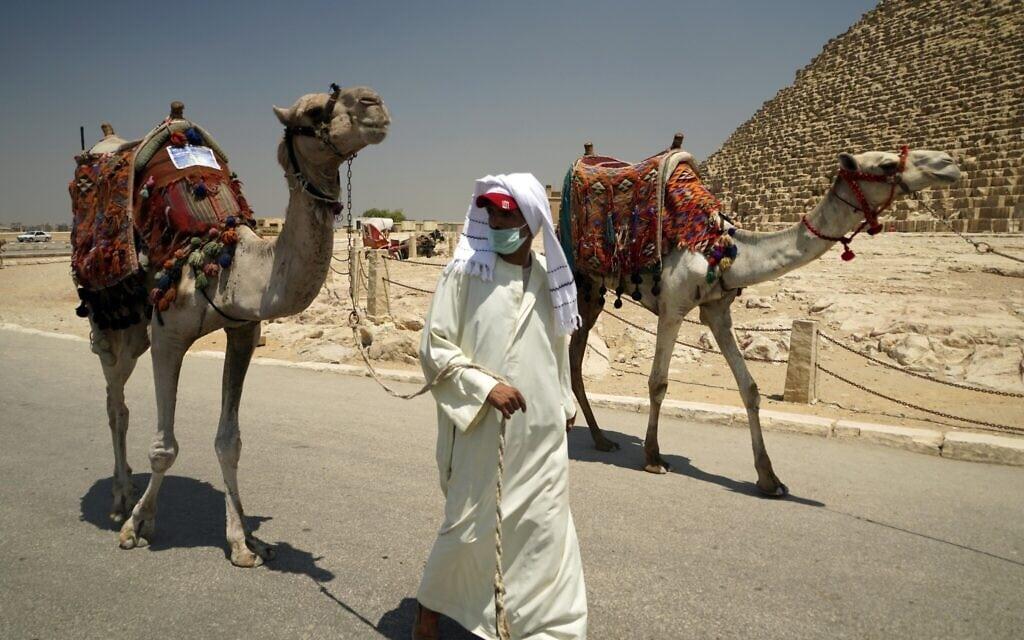 מדריך מסעות גמלים במצרים של עידן הקורונה, יולי 2020 (צילום: AP Photo/Hamada Elrasam)