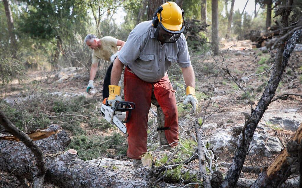 עובדים של הקרן הקיימת לישראל ביער מסריק בצפון ישראל (צילום: Anat Hermony/Flash90)