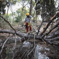 עובד של הקרן הקיימת לישראל ביער מסריק. אילוסטרציה (צילום: Anat Hermony/Flash90)