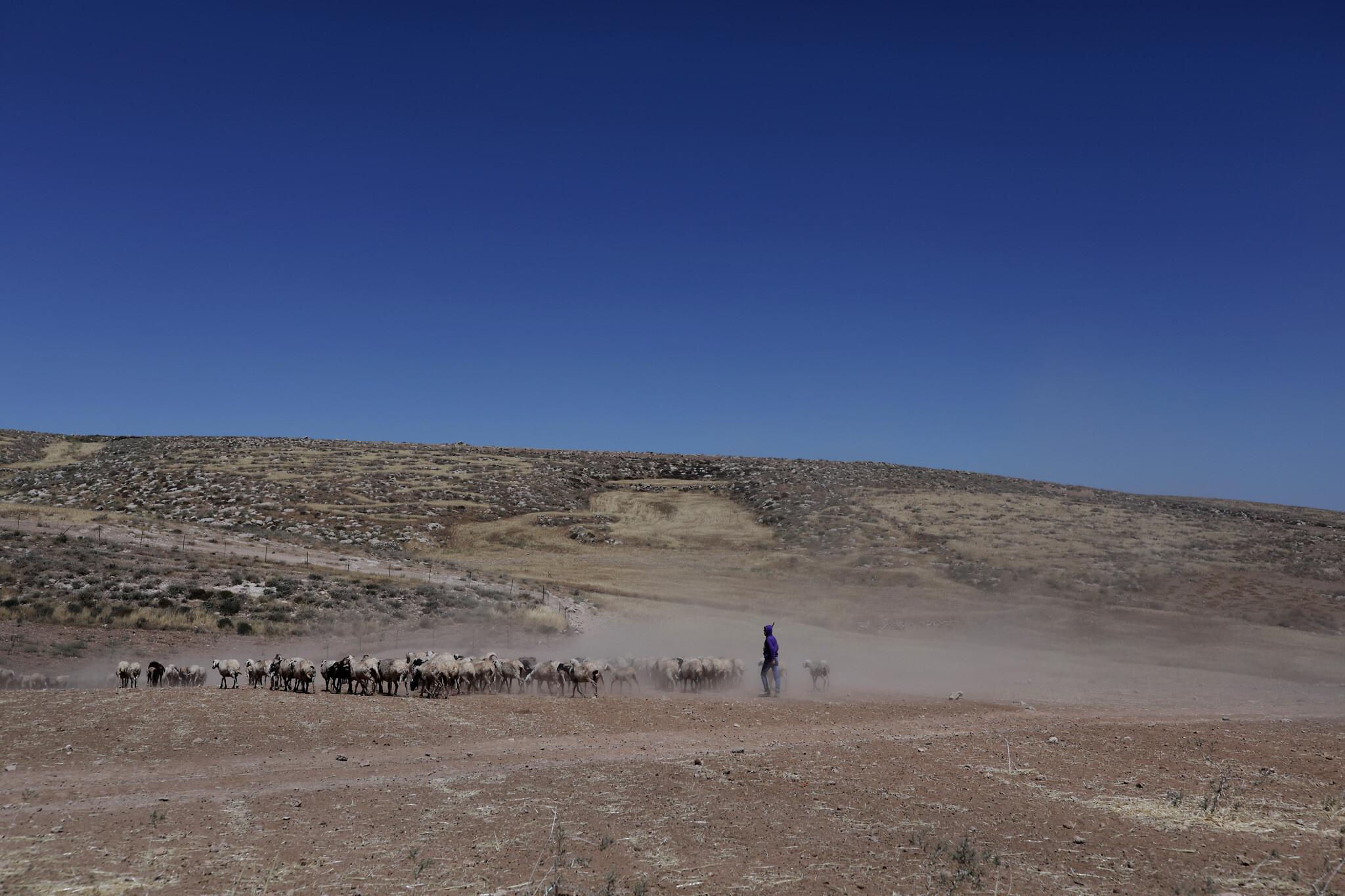 חוות טליה (צילום: אלדד רפאלי)