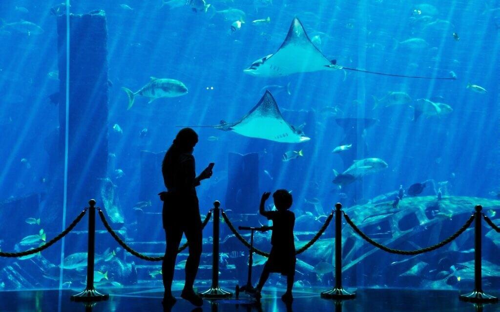 מבקרים באקווריום בדובאי, איחוד האמירויות, יולי 2020 (צילום: AP Photo/Jon Gambrell)