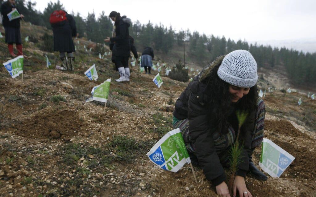 """אילוסטרציה, יהודים מחו""""ל נוטעים עצים בארץ בשיתוף קק""""ל, 2010, למצולמים אין קשר לנאמר בכתבה (צילום: Miriam Alster/Flash90)"""