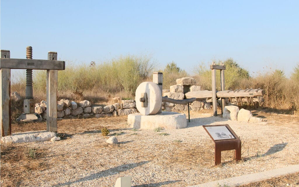 מכבשי זיתים עתיקים בגן הארכיאולוגי בגבעת התיתורה (צילום: שמואל בר-עם)