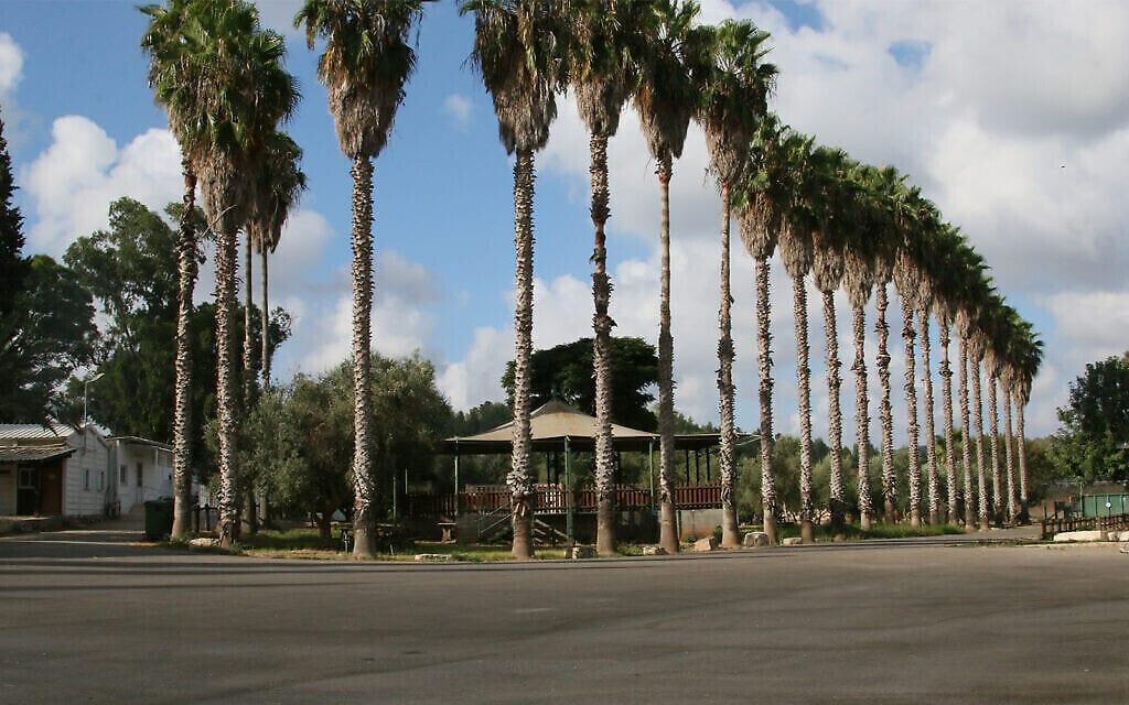 אזור פיקניקים בגן הארכיאולוגי גבעת ישעיהו (צילום: שמואל בר-עם)