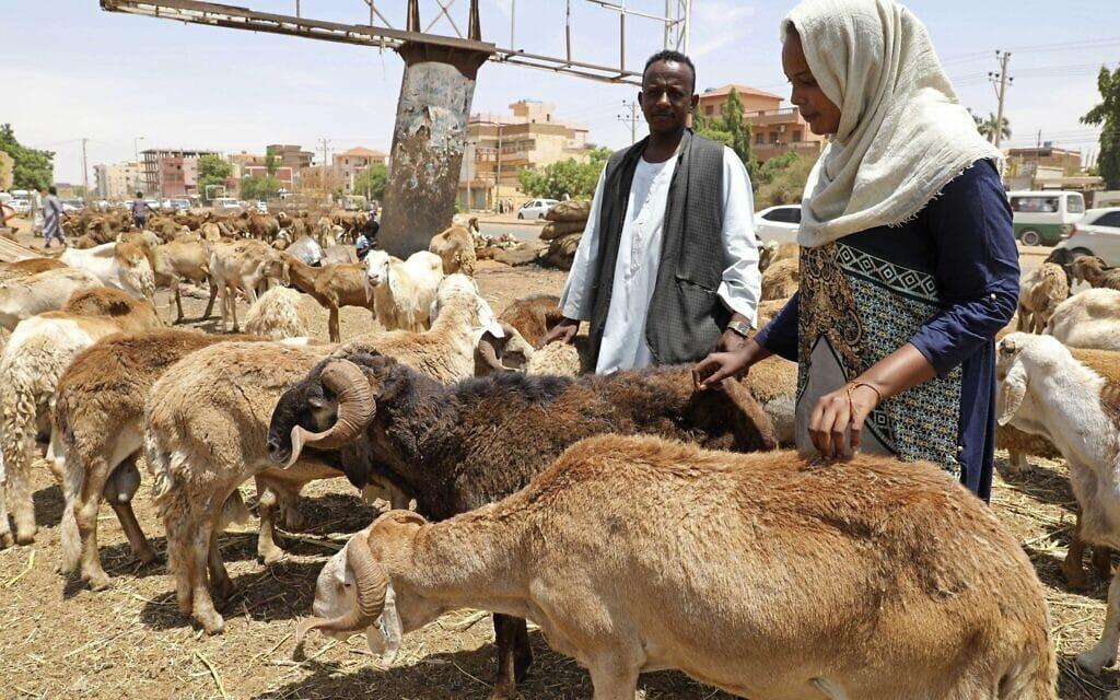 אילוסטרציה, שוק לממכר צאן בסודאן, יולי 2020 (צילום: AP Photo/Marwan Ali)