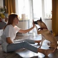 כלב, אילוסטרציה (צילום: iStock-Niyaz_Tavkaev)