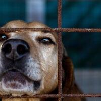 חיה בשבי, אילוסטרציה (צילום: GiovanniIaione, iStock)