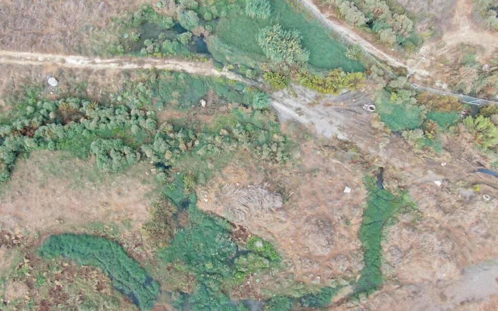 צמחייה בתוואי זרימת הביוב ממחנה חורון (צילום: ירוק עכשיו)