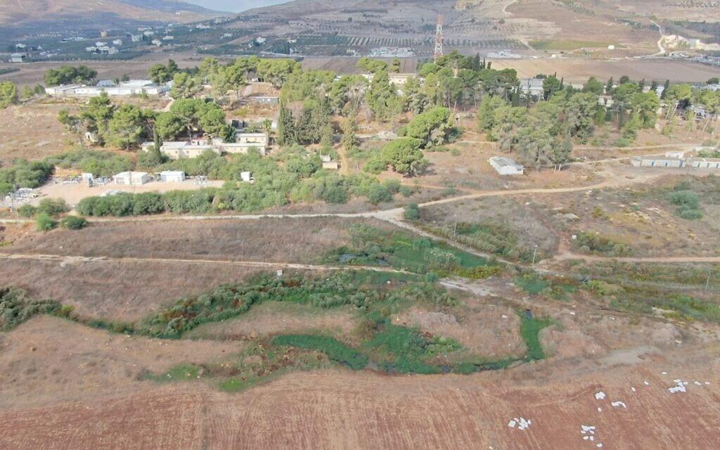 צמחייה ירוקה המעידה על זרימה של ביוב על פני השטח (צילום: ירוק עכשיו)