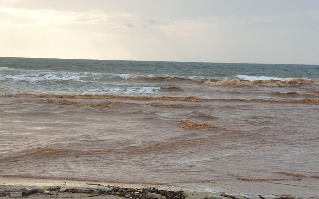 נחל פולג וחוף פולג. נובמבר 2020 (צילום: אביב לביא)