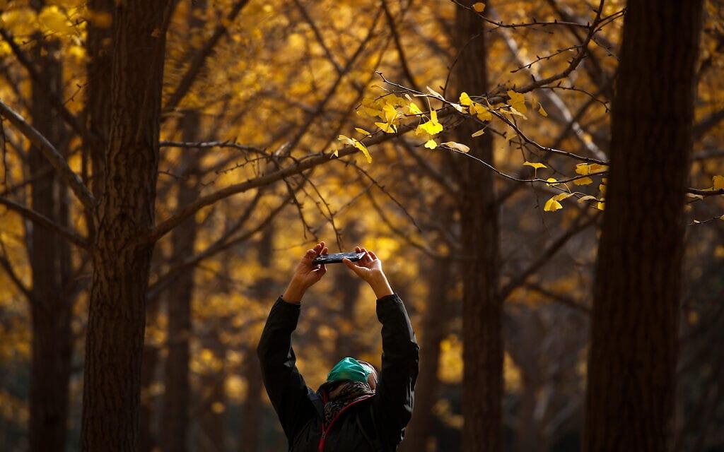אישה בפארק בבייג'ין באוקטובר 2020 (צילום: AP Photo/Andy Wong)